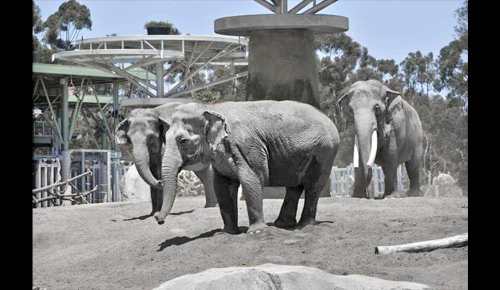 San Diego Zoo Elephant Odyssey Exhibit
